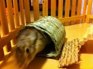 ウサギ用トンネル