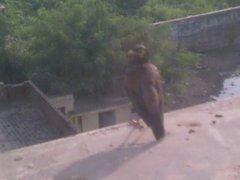 インド野鳥